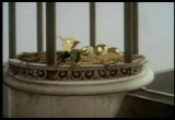The Curious Adventures of Mr. Wonderbird (Free Cartoon Videos) - Thumb 17