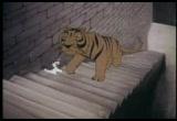 The Curious Adventures of Mr. Wonderbird (Free Cartoon Videos) - Thumb 54